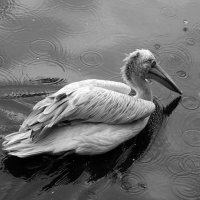В парке птиц :: Sofia Rakitskaia