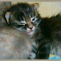 Основная задача на сегодня...Кушать..спать...расти!! :: Людмила Богданова (Скачко)