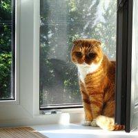 Солнечный кот :: Ирина Румянцева