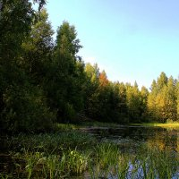 Лесное болотце :: Вячеслав Минаев