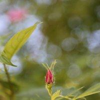 Цветочный хоровод-386. :: Руслан Грицунь