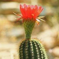 Цветок в пустыне :: Alexander Andronik