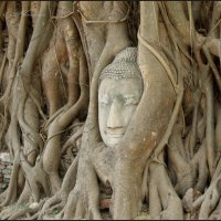 Голова статуи Будды в Аюттайе :: Наталия Григорьева