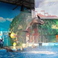 Великолепные дельфинчики :: Людмила Лосева