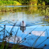 Лебединое озеро. :: ALLA Melnik
