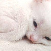 white :: Katerina Sheglova