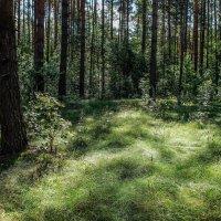 Трава мурава :: Андрей Зайцев