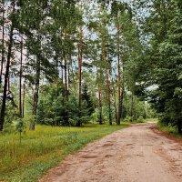 Лесная  дорога. :: Валера39 Василевский.