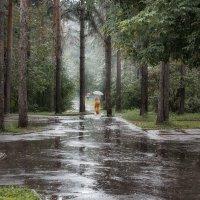 Дождливый день в Новосибирском зоопарке :: Елена Черненко