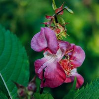Цветок :: Zifa Dimitrieva