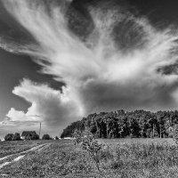 Крылом разрезая небес синеву, я б ввысь полетела :: Ирина Данилова