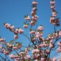 Цветочный хоровод-394. :: Руслан Грицунь