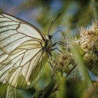 Просто бабочка :: Владимир Самсонов