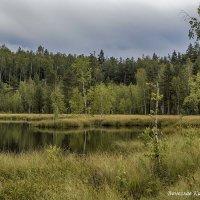 Подмосковное озеро. Фото 5. :: Вячеслав Касаткин