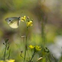 Во саду ли, в огороде :: Елена Ахромеева