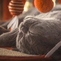 Сладкий сон :: Олег Кагадий