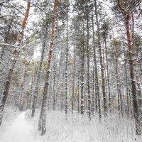 В бору зимой :: Станислав Любимов