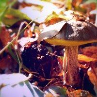 autumn mushroom frog :: Алексей Евсеев