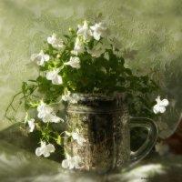Белые цветы :: nika555nika Ирина