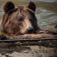 Пловец :: Михаил Крекин