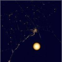 Полнолуние в летнюю ночь :: Владимир Холодный