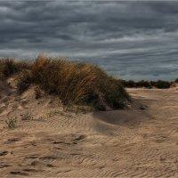 Балтийские дюны :: Irina Schumacher