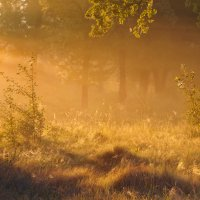 Золотистое... :: Roman Lunin