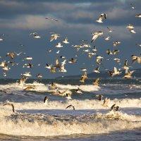 чайки 2 :: Ирина Пантелеева