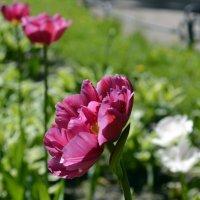 Цветы :: Никита Мяу
