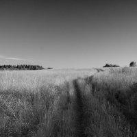 дорога , чернобелый пейзаж :: Сергей
