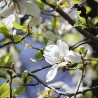 Цветочный хоровод-409. :: Руслан Грицунь