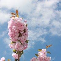 Цветочный хоровод-407. :: Руслан Грицунь