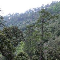 Лесные пейзажи в горах Кипра... :: Одиноков Юрий