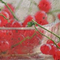 Этюд с красной смородиной :: galina tihonova