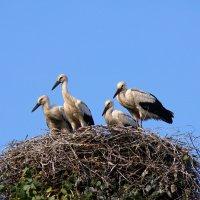 семья :: linnud