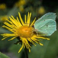 Цветок и бабочка :: Валерий Пегушев