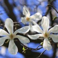 Цветочный хоровод-414. :: Руслан Грицунь