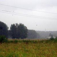 Дождь идёт. :: Мила Бовкун