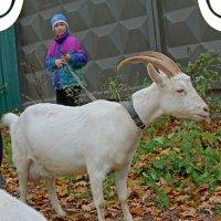 Коза и девочка :: Наталья Золотых-Сибирская