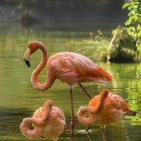 Фламинго. :: Юрий Михайлович