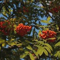 кажется, осень приближается :: mig-2111 Новик