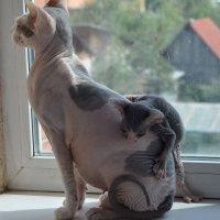Мама,покатай! :: Оксана Белова