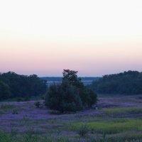 Лужайка с Xeranthemum annuum :: Андрей Lyz