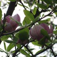 Цветочный хоровод-418. :: Руслан Грицунь