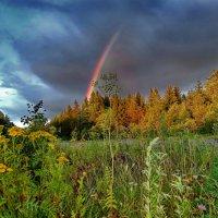 Радуга над лесом :: Валерий Талашов