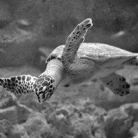 В аквариуме :: К@терин@ .