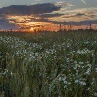 В поле на закате. :: Юрий Михайлович