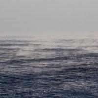 Кипящее море :: Дмитрий Проскурин