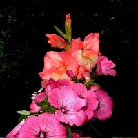 Цветочки :: Милла Корн
