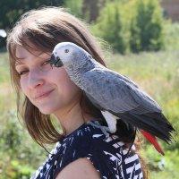 попугай на прогулке :: ОЛЕГ Корроль